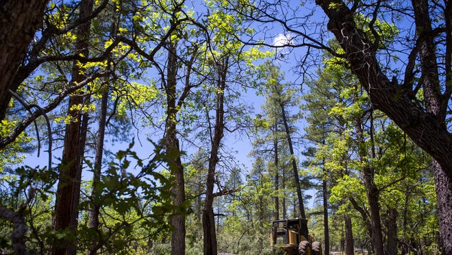 Thinning overchoked areas of Coconino and other national forests in Arizona will require more effort from the private sector to be successful.