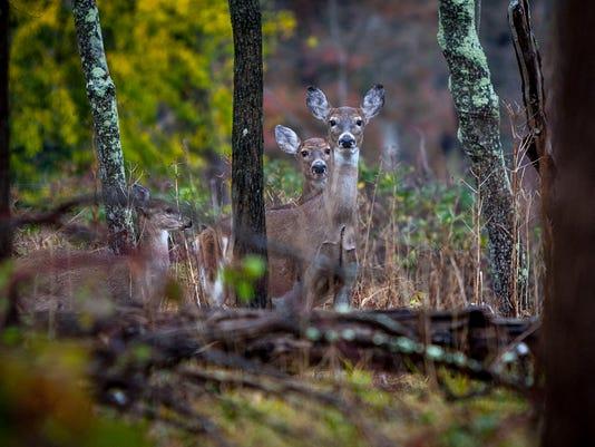 01.deer.1395.JPG