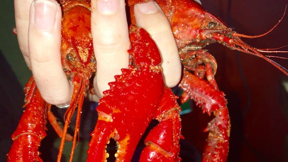 Cajun Claws in Abbeville is known for having large crawfish.