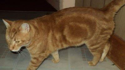 found-orangecat1114