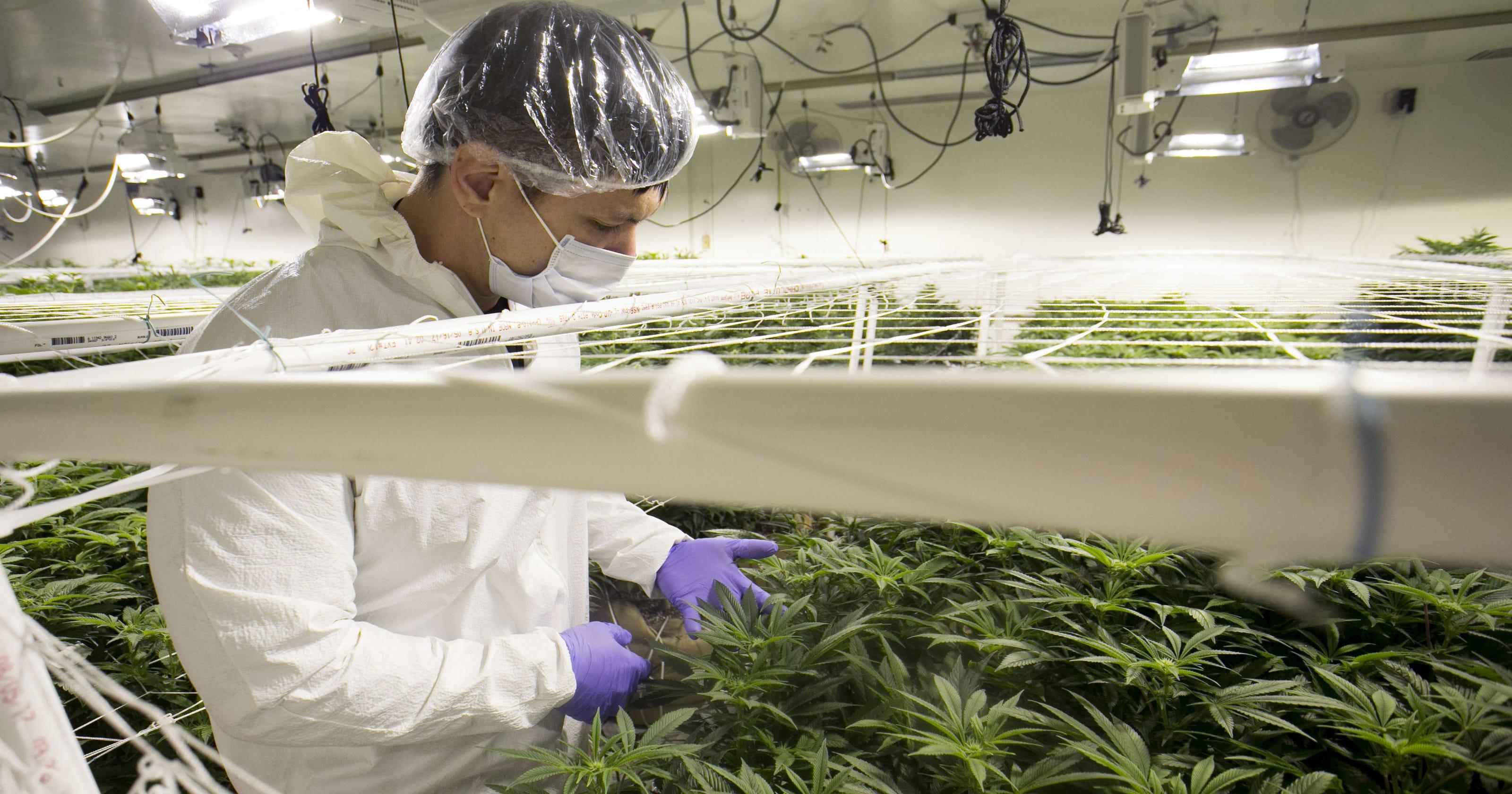 How Arizona's 'non-profit' medical marijuana industry makes