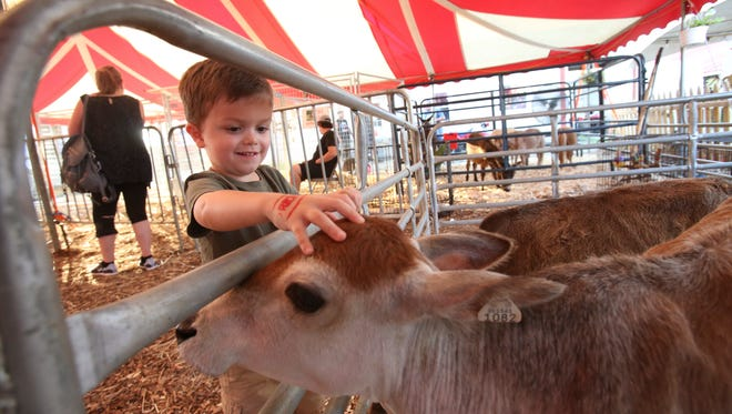 Luke Coomer, 3, pets a miniature cow during the Oldham County Fair in La Grange. Aug. 4, 2016