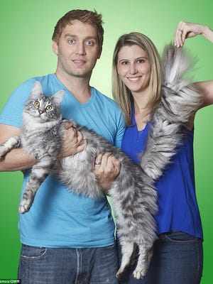 Will and Lauren Powers with Cygnus Regulus, whose 17.58-inch tail is longer than any other domestic feline, says the Guinness website.