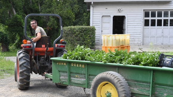 Justin Seelaus drives a tractor load of produce to the farm stand at Obercreek Farm in Hughsonville on Aug. 3.