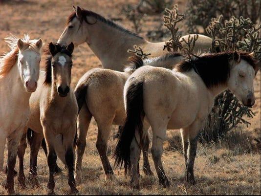 _HORSES.jpg