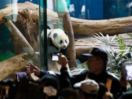 pandacub.jpg