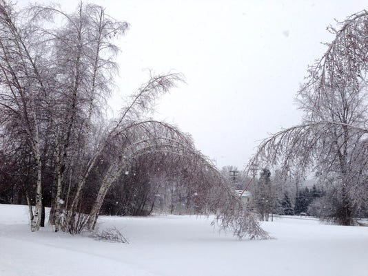-Trees under ice.JPG_20131226.jpg