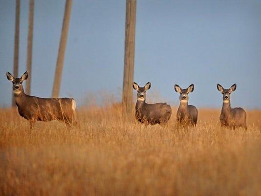-120611-Deer-A.jpg_20111206.jpg