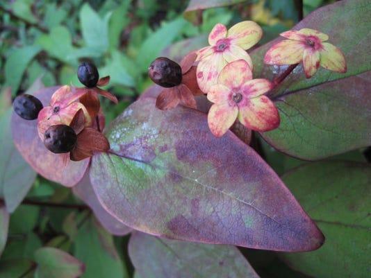 Gardening-Potted Fruit