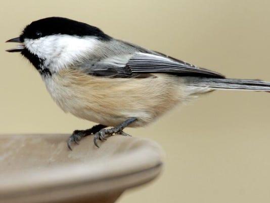 -Back Yard bird feeding 2.jpg_20071030.jpg