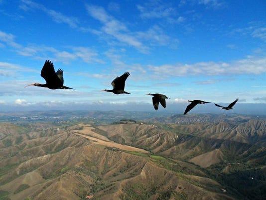 Birds In Sync (2)