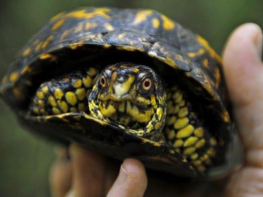Turtle Rescue_bihr.JPG