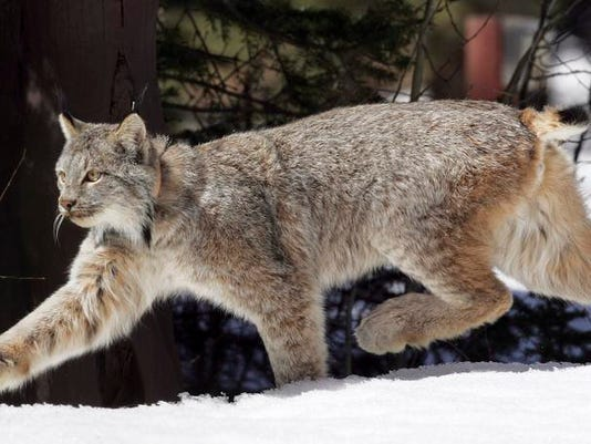 Vermont Endangered Species