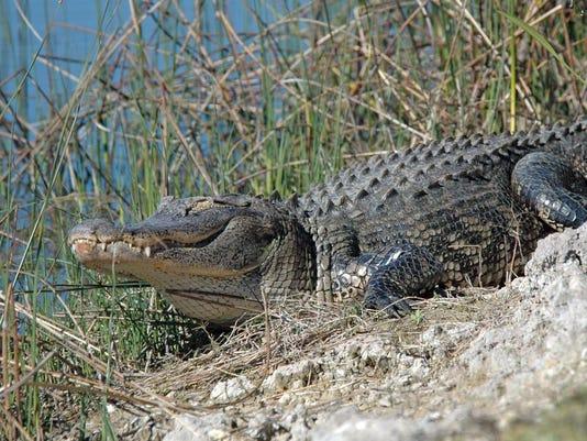 gatorsandcrocs