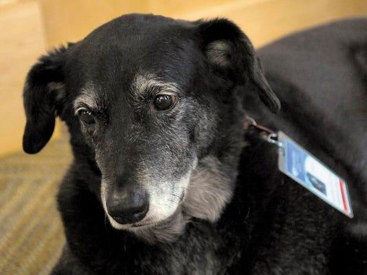 Hospice Dogs_Radw(2).jpg