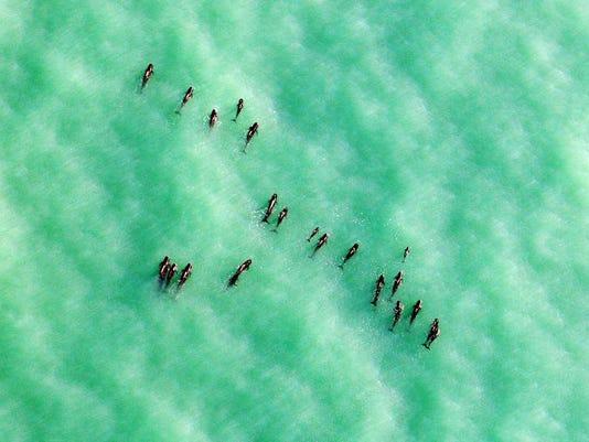 Whales MAIN Horizontal.jpg