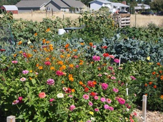 Master Gardeners created a test garden at the Park Place Community Garden. G.JPG