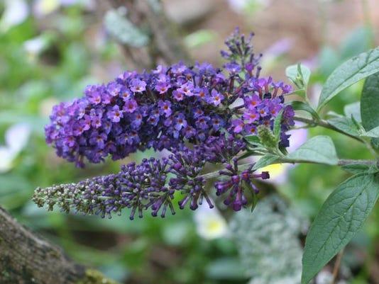 Gardening-Black Thumb_Thad.jpg