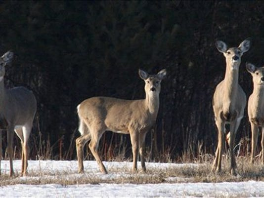 deer WEB ONLY