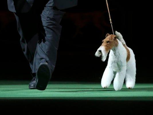 Dog Show_Bene.jpg