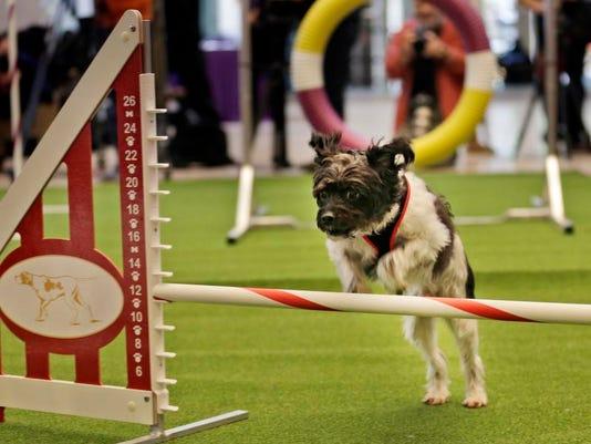 -Dog Show Mixed Breeds.JPEG-0075f.jpg_20140125.jpg