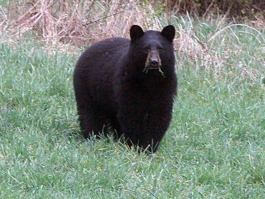 Bear_Season_Redm.jpg