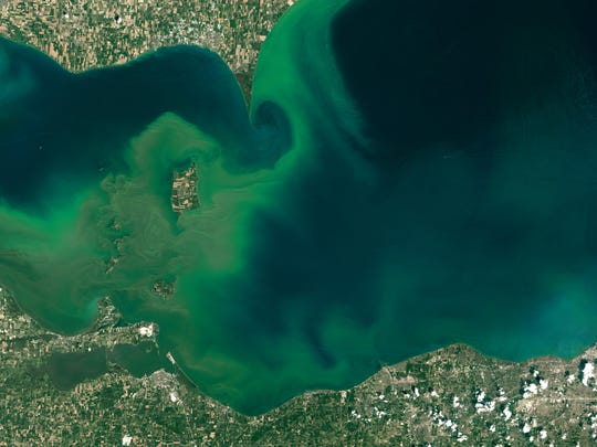 On July 28, NOAA captured this image of an algal bloom around the Great Lakes. The bloom is visible as swirls of green in western Lake Erie.