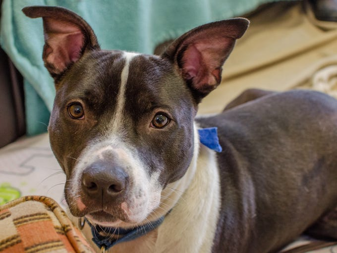 Lincoln is a 1-year-old mixed-breed dog who is looking