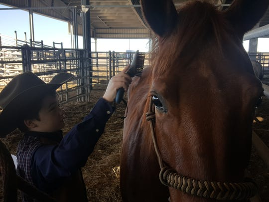 Shane Baylor, 12, combs his American quarter horse Angelita before the horse show Sunday at the 2017 San Patricio & Aransas Counties Agricultural & Homemakers Show.