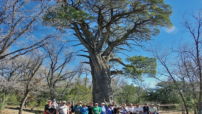 The Grant County Trails Group is planning a community hike to the Big Tree on Sunday, Feb. 21, from 1 to 3 p.m.
