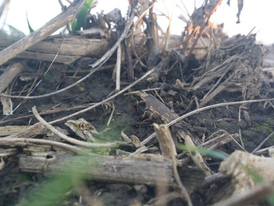 635842206164315547-Topsoil-RootSystem.jpg