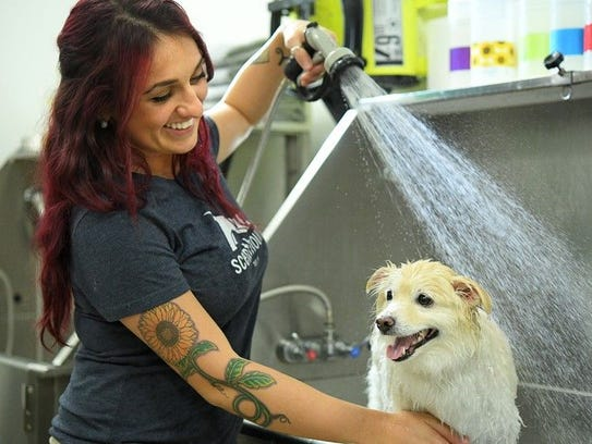 The Pensacola Humane Society is holding a Doggie Bathe-In on Saturday.