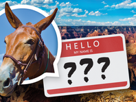 Our Mule Has a Name!!!