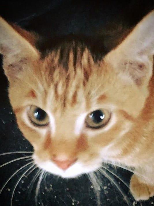 kitten of the week