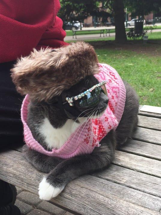 DFP sunglasses cat (5).JPG