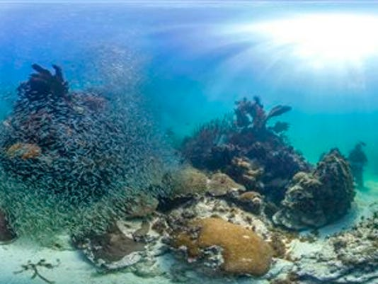 coral mapping