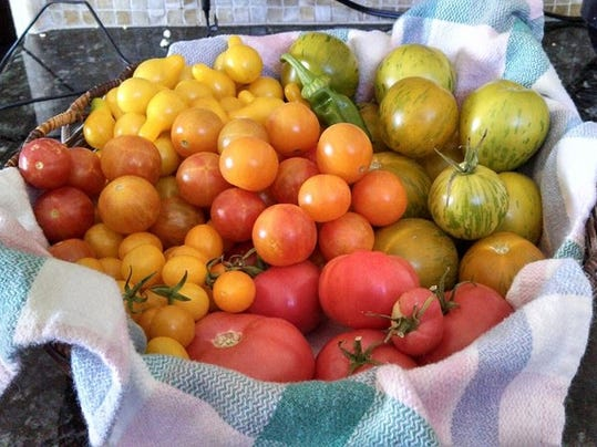 Harvested tomatoes and peppers by Liz Morrow.jpg