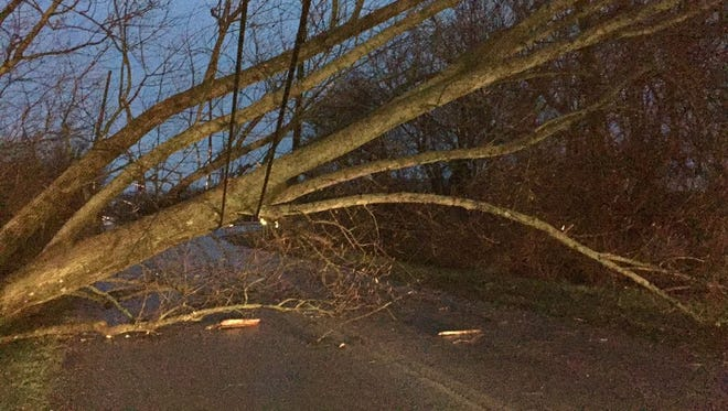 A large tree lays across power lines early Wednesday evening on North West L Street in Richmond.