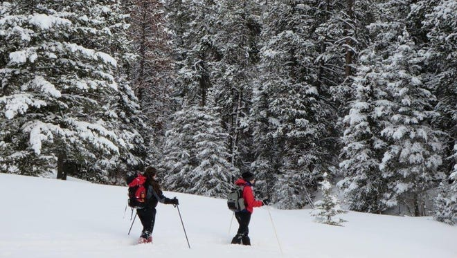 Snowshoers on Bender Creek, off of Dry Fork Road near Monarch. One of the 2016 winter wilderness walks is a trip to Bender Creek in the Little Belt Mountains on Jan. 22.