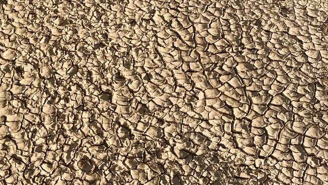 This June 22, 2018 image shows what is left of the cracked mud left behind as the Rio Grande dries near San Antonio, N.M. Federal water managers said a total of nearly 30 miles of the river have dried in central New Mexico due to drought. Managers, residents and farmers are awaiting the promise of summer rains that are expected to develop beginning Thursday, July 5, 2018 and continue into next week.