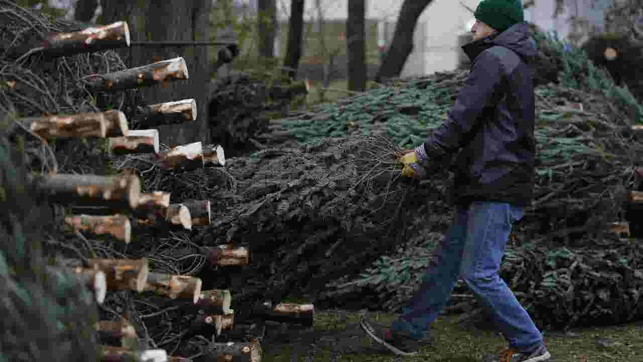 Just the FAQs: Wisconsin Christmas tree farms