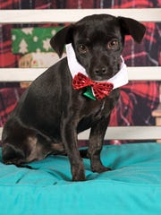 Harry is available for adoption with Friends for Life
