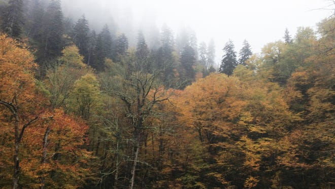 Breathtaking beauty! These photos were taken in Gatlinburg, reminding us that this is GodÕs work, every last  tree that stands so tall in the mountains.