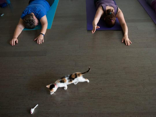 A kitten explores the room during a Pilates class.