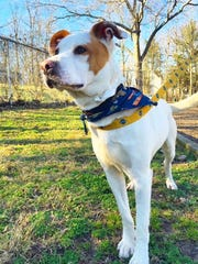 Floyd is a 1-year-old hound dog mix looking for his forever home.
