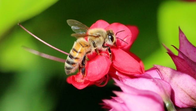 An environmental legislative proposal would stop state use of an agricultural insecticide, neonicotinoids, thought to be driving the honeybee decline, on parklands and along highways.