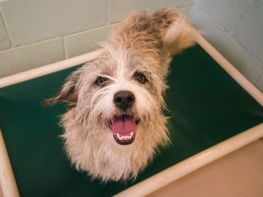 Aggie at the Cumberland County SPCA on Wednesday, January