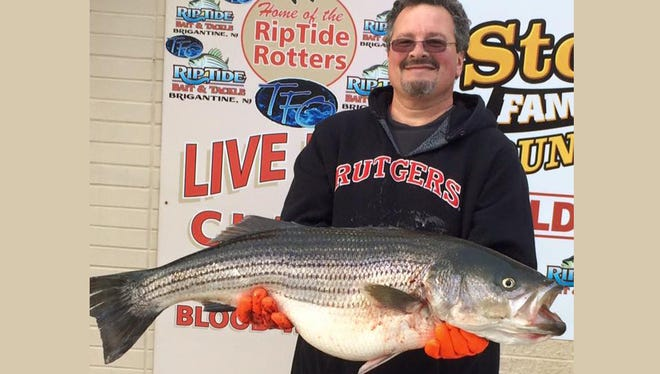 """Russ Richards was out fishing in a boat in front of Ventnor and hooked into this big 41"""",  31lb., bass. 12/13/15."""