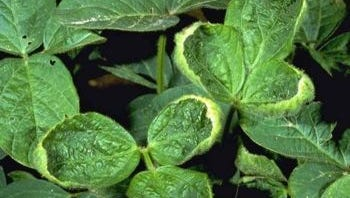 The Minnesota Department of Agriculture (MDA) announced on Dec. 12, new restrictions on the use of the herbicide dicamba in Minnesota for the 2018 growing season.
