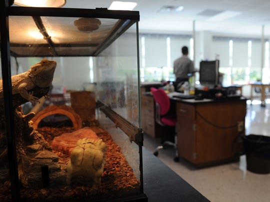A bearded dragon rests in the new Barwise Middle School sixth-grade science lab in this Sept. 11, 2016, file photograph. Barwise saw the addition of about 300 sixth-graders welcomed about 300 new sixth-graders and McNiel about 400 sixth-graders. A bond project completed in 2016 added accommodations to prepare for the influx.